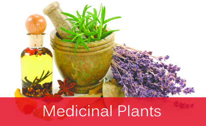 Medicinal Plants and Aromatherapy